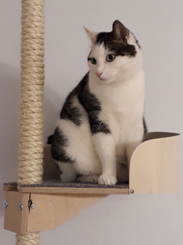 Kissapuu cat tree