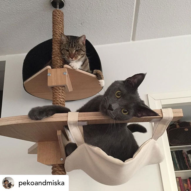Kissan kiipeilypuu_cat climbing tree