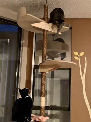 Kissapuu_cat_tree_climbing tree_cat furniture_kiipeilypuu