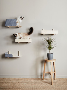 KISSAPUU_cat_tree_presenting_cat_wall_shelves_00461_reduced